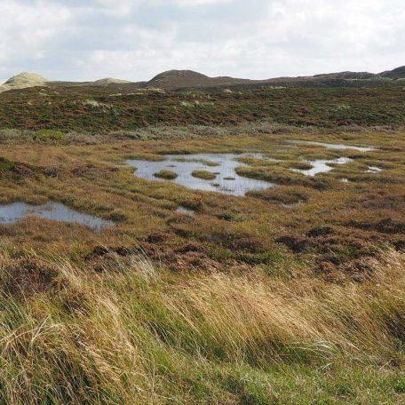 raised-bogs